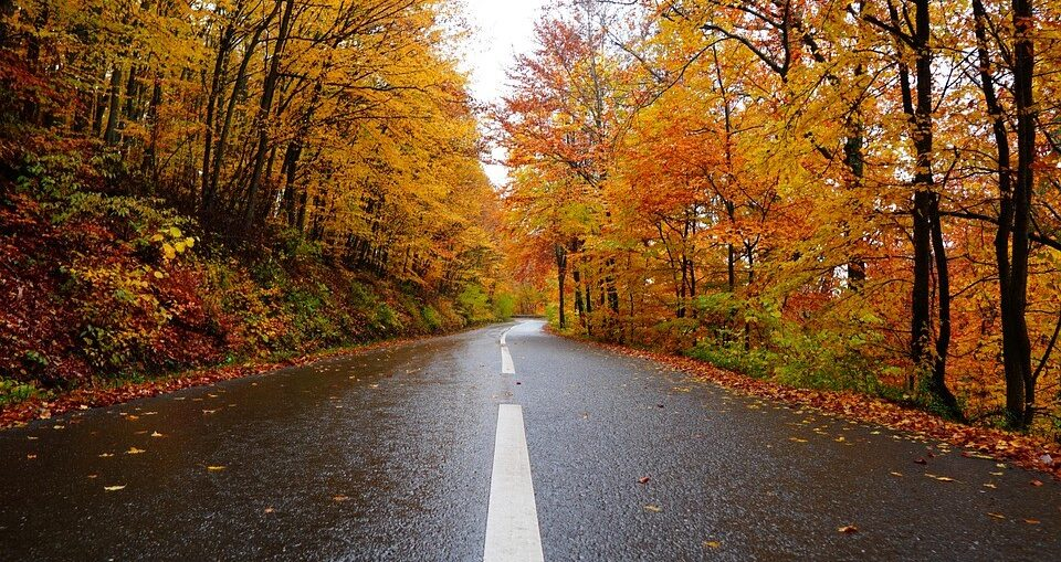 Road with fall leaves and trees on either side